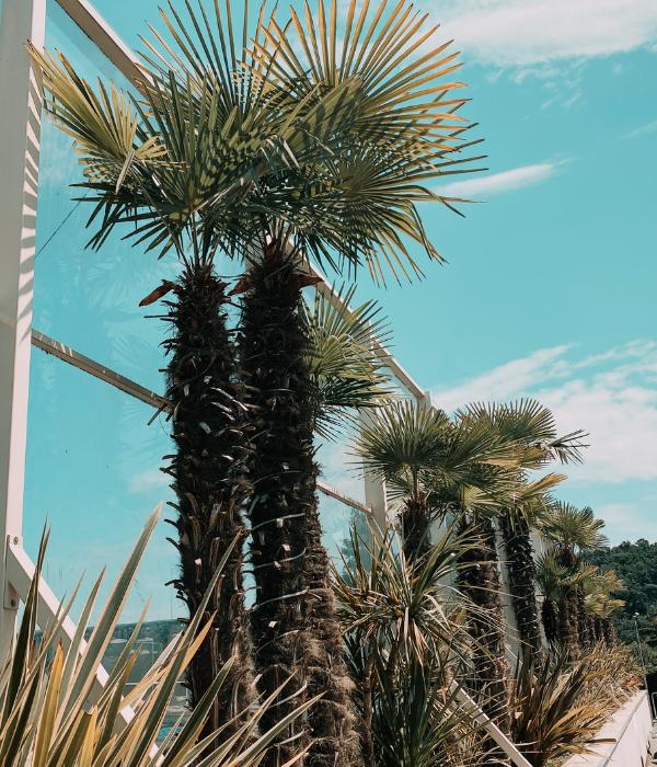 coco beach lago di garda